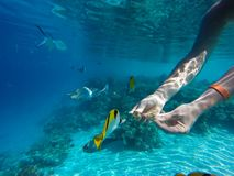 Young girl diving in a blue clean water. With coral stock images