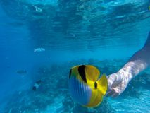 Young girl diving in a blue clean water. With coral stock photos