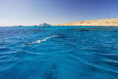 Young girl diving in red sea Royalty Free Stock Photo