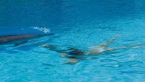 Young Girl And Dolphin Swimming In Pool stock footage
