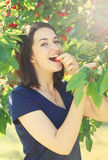 Young girl eats cherry from cherry tree Royalty Free Stock Images