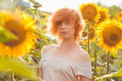 Young girl enjoying nature on the field of sunflowers at sunset, portrait of the beautiful redheaded woman girl with a sunflowers stock photography