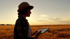 Young girl farmer in plaid shirt in wheat field on sunset background. The girl uses a tablet, plans to harvest stock photo