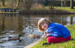 Young girl feeding ducks with bread Royalty Free Stock Photo