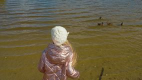 Young girl feeding ducks on lake in autumn park shoulders view stock footage