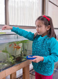 Young Girl feeding Goldfish. Stock Images