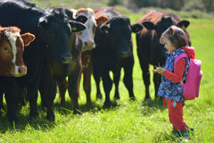 Young girl feeding grass to cows in a field Royalty Free Stock Photography
