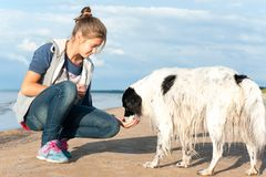 Young girl feeding her lovely dog on summer beach royalty free stock photos