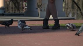 Girl feeds pigeons. Young girl feeds wild pigeons. The girl spend her leisure time alone walking in the park. People and nature. Prores codec stock video footage