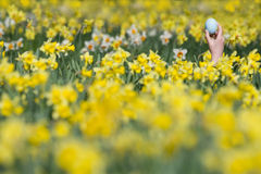 Young girl finding Easter egg in field of daffodils Royalty Free Stock Photography