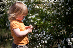 Young girl among flowers Stock Photos