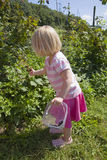 Young girl fruit picking Stock Photos