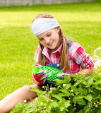 Young girl in the garden caring for strawberries Royalty Free Stock Image