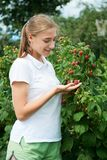 Young girl gardener in white T-shirt gather a harvest raspberry. On summer day royalty free stock photography