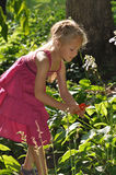 Young Girl Gardening. A young girl enjoys some quite time outside working with various plants on a warm, sunny day royalty free stock photos