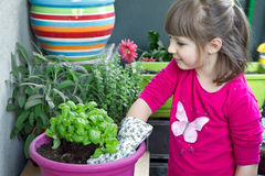 Young girl gardening basil plant smiling Royalty Free Stock Photography