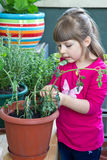 Young girl gardening rosemary plant smiling Stock Photo