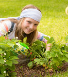 Young girl gathering berries Royalty Free Stock Photo