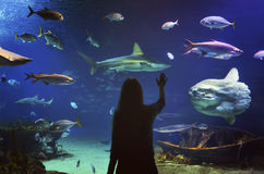 Young girl in glass tunnel in L'Oceanografic aquarium. With fish ,Valencia, Spain royalty free stock photo