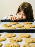 Young girl grabbing cookies from a baking tray. Photo of a young girl grabbing a warm chocolate chip cookie from a baking tray stock photography
