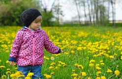 Young girl on green meadow. Stock Images