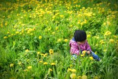 Young girl on green meadow. Royalty Free Stock Photo