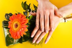 Young girl hands with beige color nails on Gerbera flower and yellow background stock photography