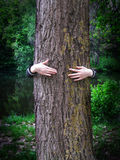 Young girl hands embracing a tree. The hands of young girl embracing the trunk of a tree in forest Royalty Free Stock Image