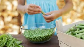 Young girl hands shelling peas into glass bowl stock video