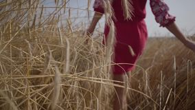 Young girl happily walking through a field touching with hand wheat ears. Beautiful carefree woman enjoying nature and stock footage