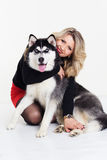 Young girl with her husky dog  on white Stock Images