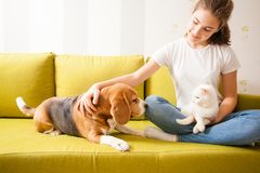 Young girl with her pets. Pets are looking at each other while girl is sitting and patting them stock photography