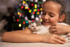 Young girl with her rescued kitten in front of the xmas tree at Stock Photos