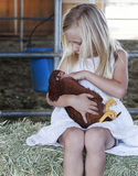 Young Girl holding Chicken. A young blond girl wearing white eyelet dress sitting on bale of hay in barn while cradling and petting red chicken royalty free stock photo