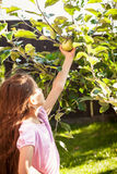 Young girl holding green apple growing on tree Royalty Free Stock Photos