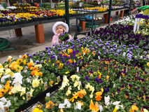 Young girl holding pansies Stock Photography