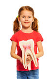 Young girl holding tooth dummy with her hands Royalty Free Stock Photography