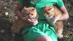 Young girl holding two red cats in the forest. Walk two red cats on a sunny day stock video footage