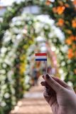 Young girl holds in hand little paper Holland flag on background of beautiful arch way of lily flowers in spring time in royalty free stock photos