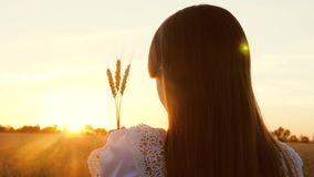 Young girl holds wheat in her hands and looks at beautiful sunset over a field of ripe wheat. stock video