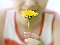 Young girl holds a yellow dandelion. Royalty Free Stock Images