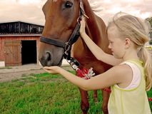 Young girl and horse. A young girl staying with a horse. Close up Royalty Free Stock Image