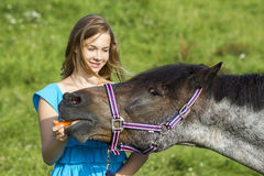 Young girl with horse Stock Image