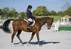 Young girl in a horse riding show Stock Images
