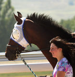 Young Girl with Horse Royalty Free Stock Images