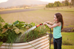 A young girl hosing her vegetable garden on the country Royalty Free Stock Photo
