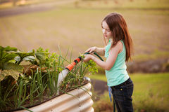 A young girl hosing her vegetable garden on the country Royalty Free Stock Photography