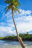 Young girl hugging a palm tree. Young girl hugging high palm tree. Tropical landscape, caribbean view Royalty Free Stock Images