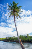 Young girl hugging a palm tree. Young girl hugging high palm tree. Tropical landscape, caribbean view Royalty Free Stock Image