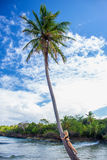 Young girl hugging a palm tree. Young girl hugging high palm tree. Tropical landscape, caribbean view Royalty Free Stock Photos